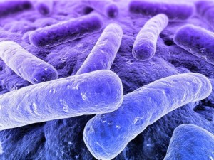 Gut and Brain Activity, Bacteria