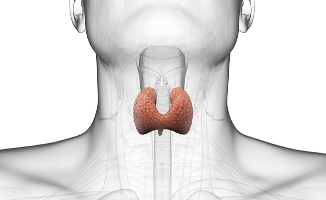 Your Thyroid is More Important Than You Think!