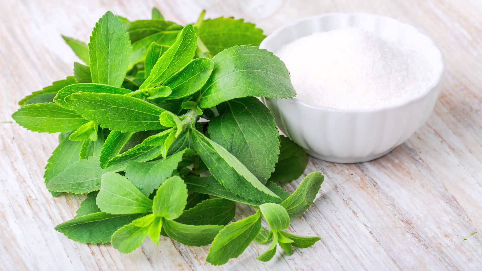 New Study says Stevia May Help Control Blood Sugar Levels