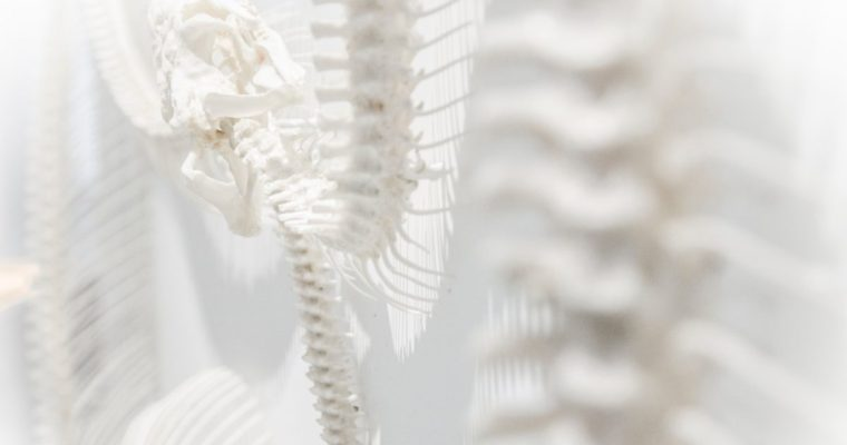 Healthy Bones: Why Calcium Alone Just Doesn't Cut It