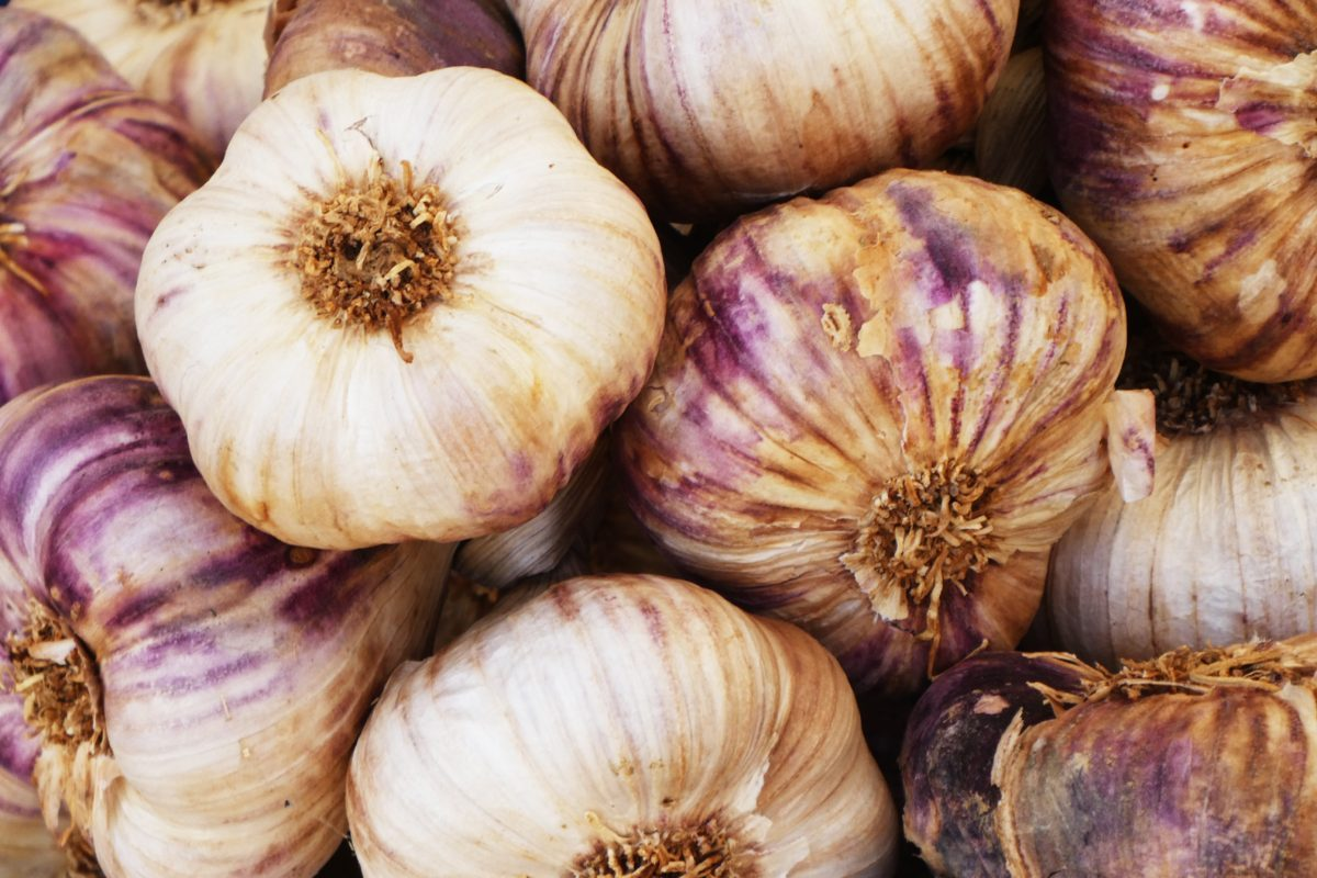 New Study: Aged Garlic Extract May Help with Inflammation Brought on by Obesity